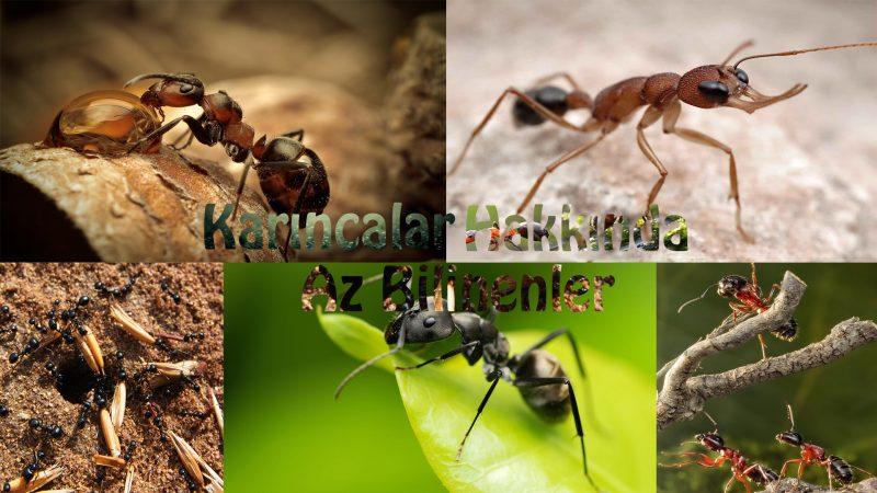 Karıncalar Hakkında Az Bilinenler